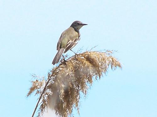 壁纸 动物 鸟 鸟类 雀 桌面 500_375