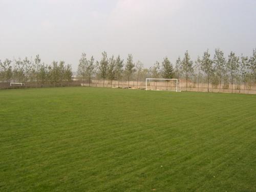 青岛黎明足球俱乐部