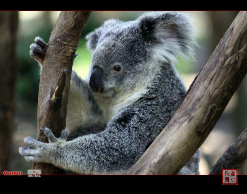 大自然怎么会创造出这么可爱的动物!