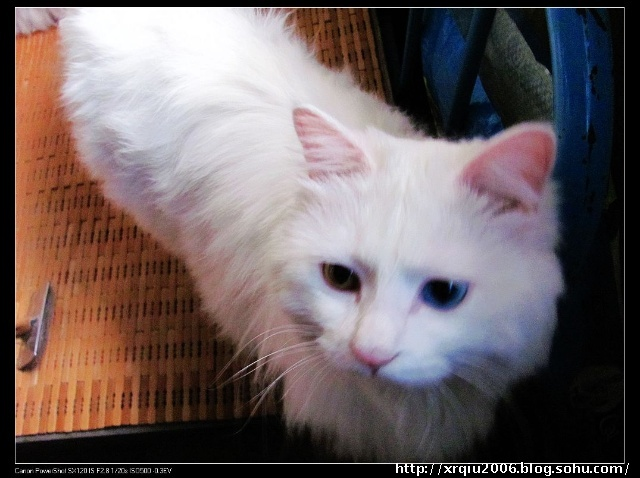 壁纸 动物 猫 猫咪 小猫 桌面 640_478