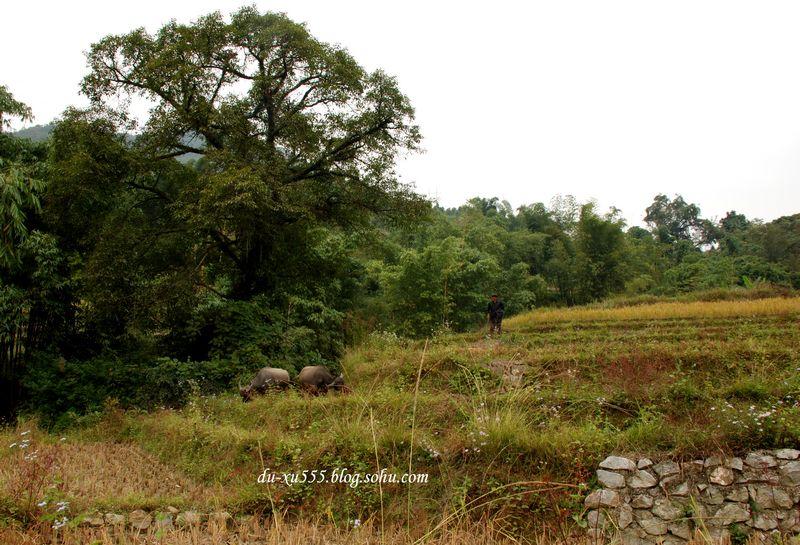 乡村农妇田园风景油画