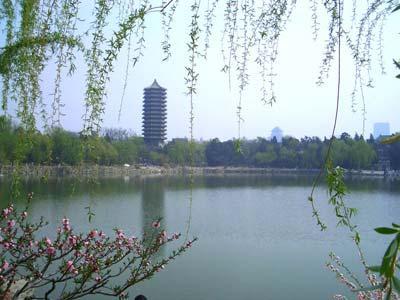 北大校园风景图片