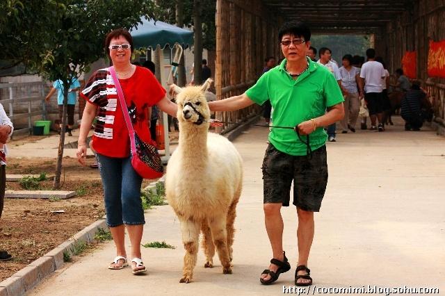周六全家活动2——动物庄园与扒牛脸儿