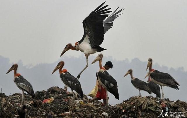今天:世界环境日 污染的地球