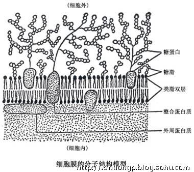 护肤基础知识篇:《人体皮肤结构与护肤品设计原理》