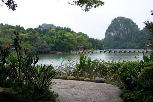 鲤鱼大树风景图片