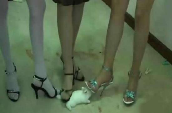 踩兔女_网络出现年轻女子高跟鞋踩踏小动物(图片)-renbing-搜狐博客