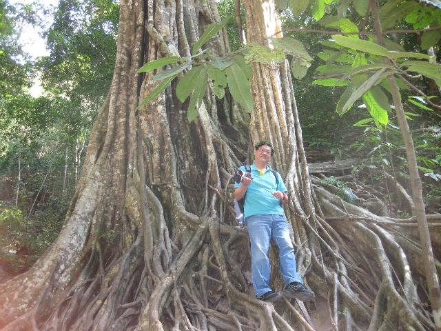 世界上最长寿的植物——龙血树 云南有