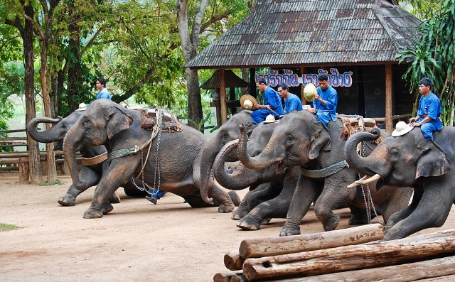 模仿大象的步骤