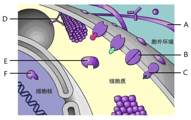 所以在动物细胞工程中常用